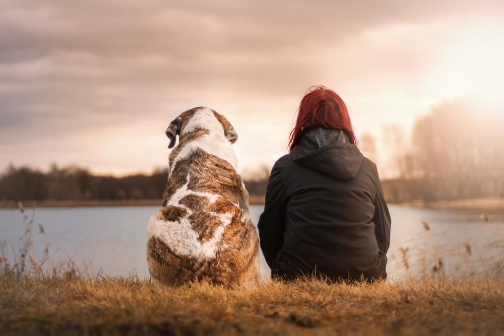 Doggie Education